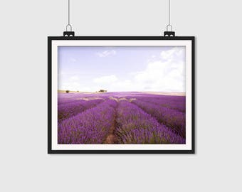 Lavender, Flower Photography, Floral Print, Lavender Fields, Landscape Photography, Nature Photography, 5x7, 8x10, 8x12, 11x14, 12x18, 16x20
