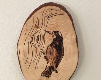 Acorn woodpecker wood burning
