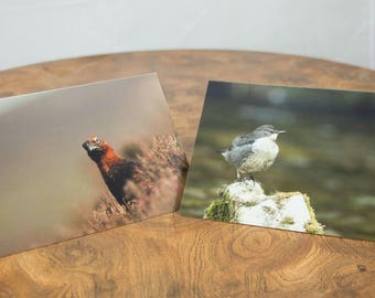 Dipper and Grouse (Pack of 4 cards, 2 of each design)