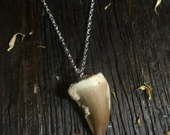 Tooth necklace | short length tooth necklace