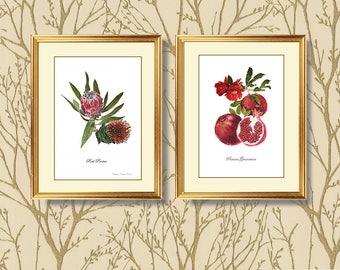 Pomegranate, Instant Art Download, Wall Art, Greeting Card,Botanical Art,digital download,digital art download, Flower Art