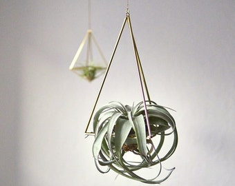 Himmeli tetrahedron Nr01 + air plant