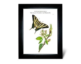 Vintage Butterfly and Flower print on white/ivory