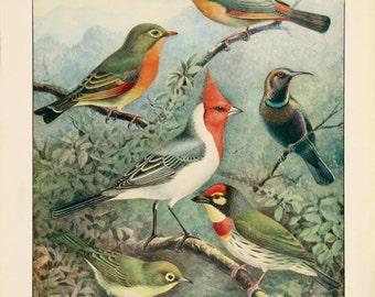 A3 Bird Print Wall Art - Exquisites (Print #11)