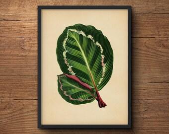 Botanical Leaves Print, Tropical Wall Art, Tropical Leaf Prints, Tropical Art Decor, Tropical Leaves Art, Tropical Artwork