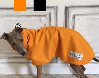 Italian Greyhound iggy Gingham Lwvrwttw d'Italie Italienisches Windspiel Galgo italiano Greyhound Piccolo Levriero Italiano 이탈리안 그레이하운드