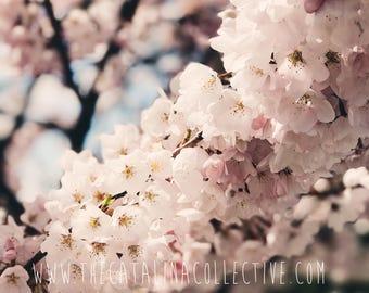 Blush pink blossoms