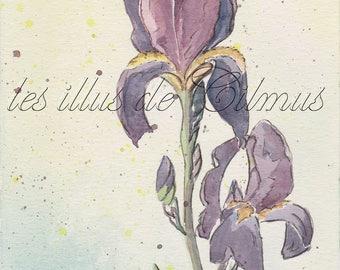 """Affiche A5 à télécharger """"Iris violet"""" : collection """"les fleurs"""""""