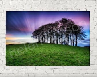 Fairy Woods - Trees on the Devon & Cornwall Border - Instant Download - Printable Art Landscape Photo - Fine Art Print - Wall Art