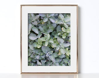 Soft Green Art Digital Download Printable Art Soothing Art Pretty Photography California Wall Art Portland Style Hipster Art Home Decor Neo
