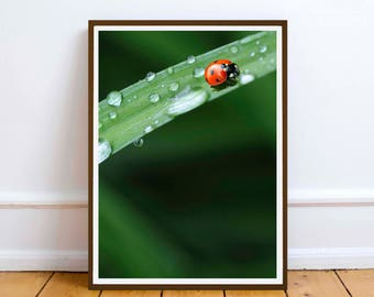 LadyBird Leaf flower Wall art print - Printable Digital Download - wall poster print - Summer Sunshine Home Decor