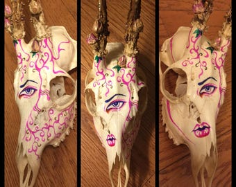 Hand Illustrated Roe Deer Skull