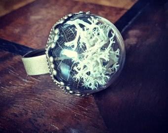 Terrarium Ring