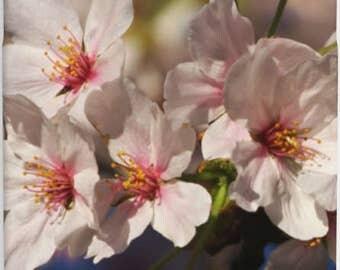 Cherry Blossom Phone Case (Washington, D.C.)