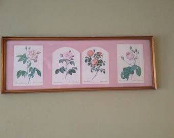 Roses by Redoute -Rosa Rosier Shabby Chic Pink Framed Botanical Print Vintage