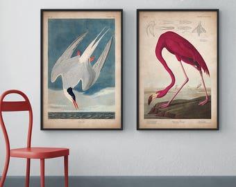 Audubon birds, Print set, Flamingo print, Tern print, Audubon print, Birds of America, John James Audubon, Large print, Wall art