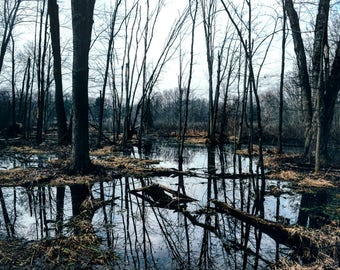 Swamp Reflections