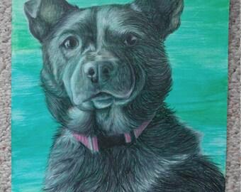Pet Portrait-Colored Pencil
