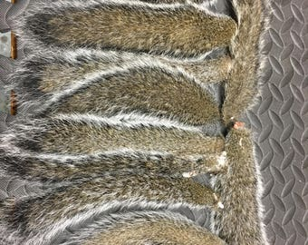 Gray squirrel tails