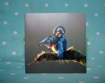 Kingfisher Card, Blank greetings card, Birds, Wildlife, Kingfisher, Preening, Photography, Dale Sutton