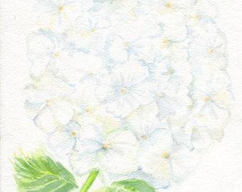 White Hydrangea Watercolor Painting Original, floral art 8 x 10, original flower painting, hydrangea artwork, Farmhouse Decor