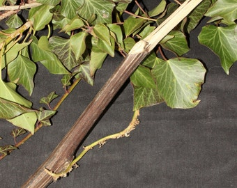 Rare Hand-Carved Burdock Wand - Cleansing, Attraction - Pagan, Wicca, Witchcraft, Herb
