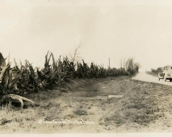 vintage photo 1913 Trufant Michigan Stump Fenses Old Car on Road RPPC
