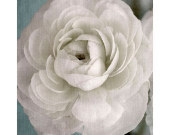 White Flower Art Print, Ranunculus Print, Wedding Decor,  Fine Art Photography, Ethereal Wall Art, White Decor