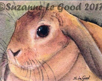 LOP RABBIT aceo Limited Edition mounted print by Suzanne Le Good