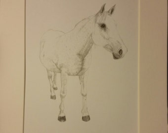 Horse Graphite Print. 8x10 matted