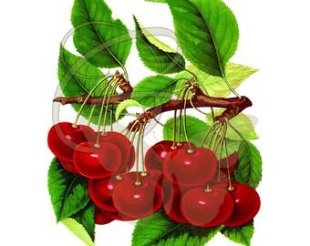 Digital Fruit Cherry Clip Art Crafting Illustration Scrapbooking Printable Artwork Image Download