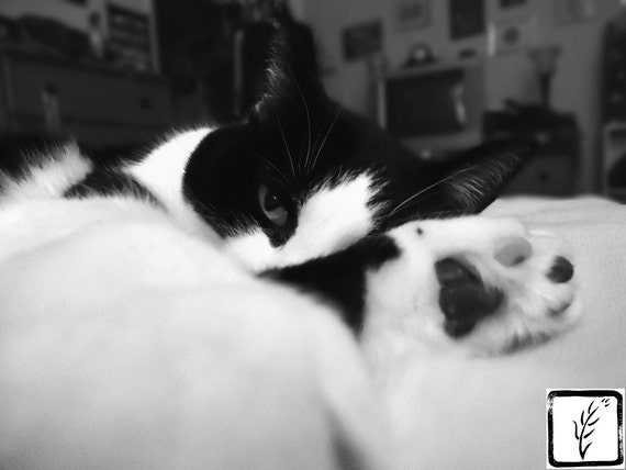 B&W Photograph, photo print, wall art, home decor, fine art, cat
