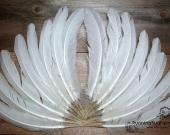 """Secondary Wing Feather Natural Cruelty Free Real Bird Feathers White Wyandotte Rooster Flight Feathers For Crafts Smudge 20 @ 7 - 7.5"""" / WW9"""