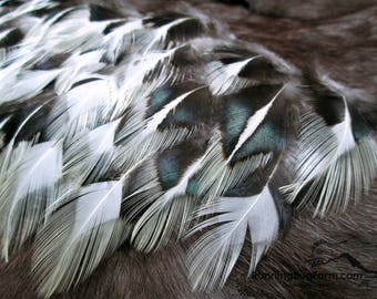 Craft Feathers Natural Feathers Cruelty Free Feathers Black & White Real Bird Feathers Loose Silver Laced Rooster Feather For Crafts / SLC9