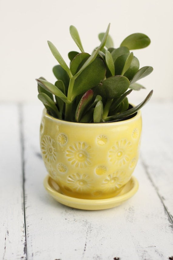 yellow planter with coaster