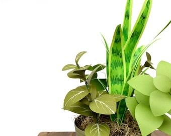 Paper Plant Arrangement