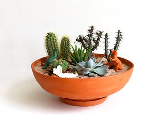 Terra-Cotta Planter: Wide
