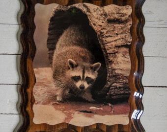 Vintage 1970's Kitsche Laminated Photo of Racoon on Wood