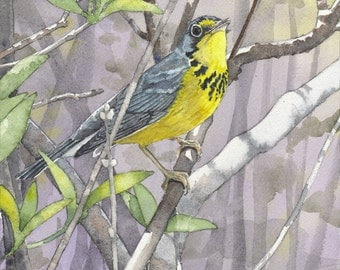 Canada Warbler #2 - Open edition print of an original watercolor (fits 11x14 frame)
