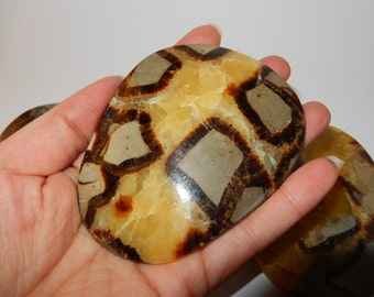 Septarian Nodule Palm