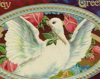 White Dove With Red Roses- Vintage Embossed Birthday Postcard – Advertising Postcard Promoting This Design Series
