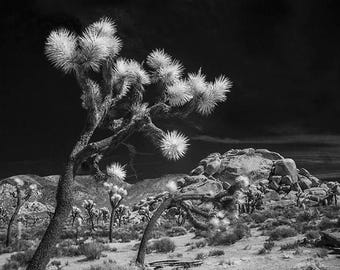 Joshua Trees and Boulders in Infrared Black and White or Sepia Joshua Tree National Park California No.0393 A fine Art Landscape Photograph