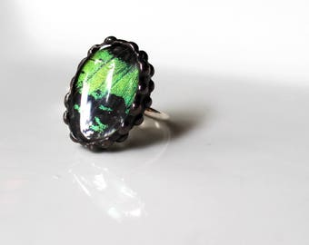 Real Moth Sterling Silver Ring, Madagascan Sunset Moth, Green Oval Ring