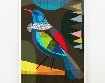 Proud, New Zealand, Tui, Bird, Print