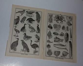2 Antique illustrated dictionary pages mullusks birds black and white drawings old paper ephemera scrap art mixed media supplies