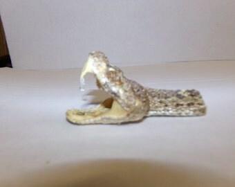 1 real animal taxidermy stuffed rattle snake head mount reptile part bone teeth fang diamond back
