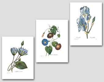 Botanical Art Prints (Blue Flower Art, Blue Room Decor, Blue Nursery Decor, Blue Wall Art) -- Redoute Set of 3 Botanical Prints