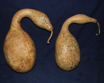 Set of Two Dried Duck Gourds Craft Ready