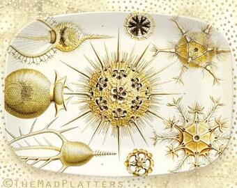 Haeckel Protozoa melamine platter