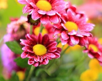 Flower Photography - Fuchsia Flowers Fine Art Photo Print - Dreamy Romantic Style Decor - Size 8x10, 5x7, or 4x6